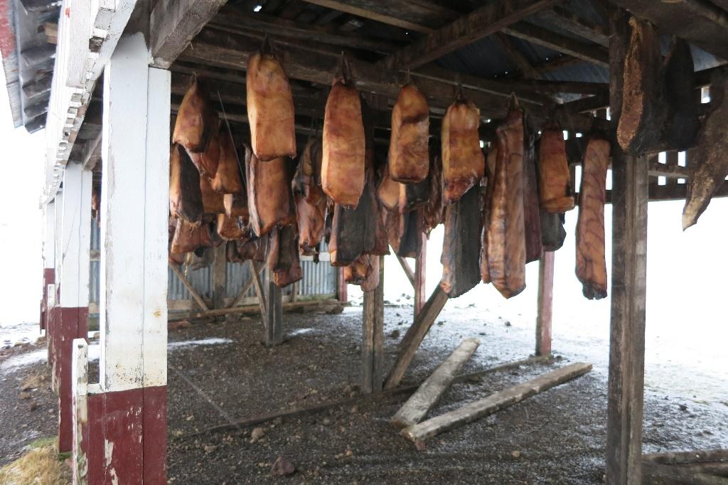 Bjarnarhofn Shark Meat Curing