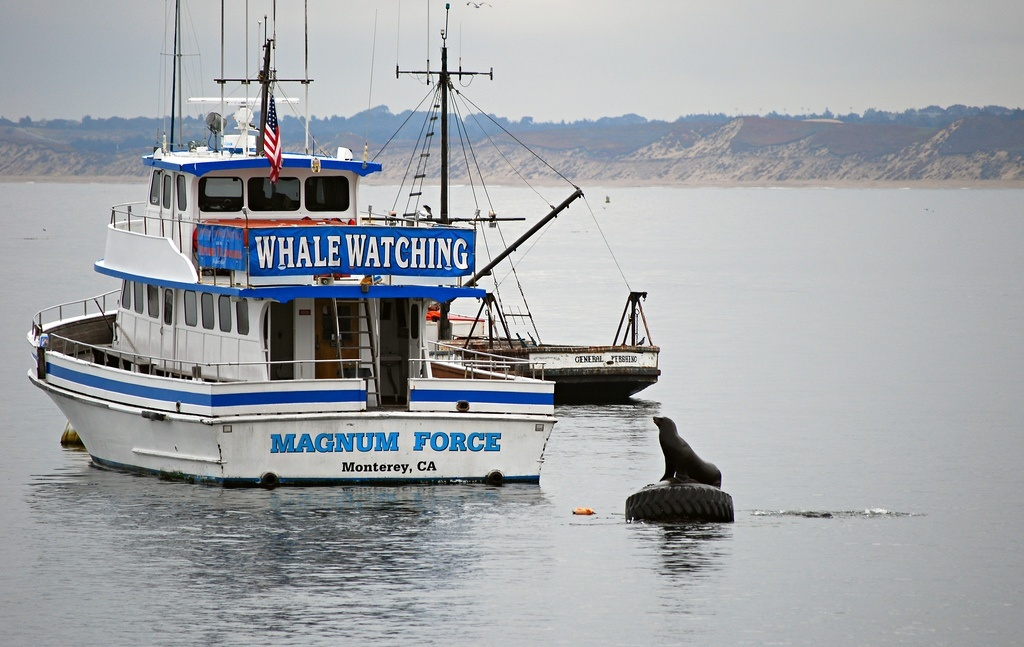 Monterey Bay Whale Watching Tours