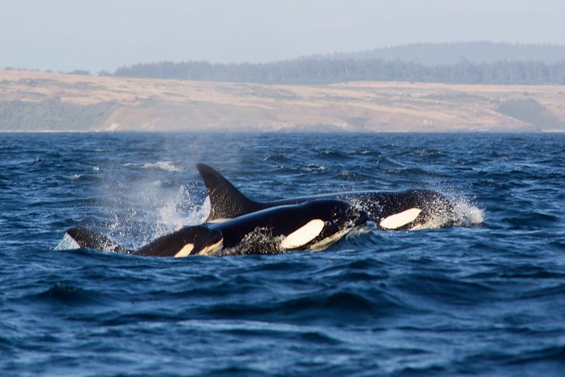Orcas Island Tours